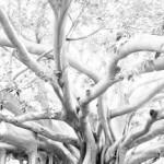 Anche i Ficus di piazza Marina nelle foto di Morello in mostra al Castello a mare