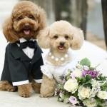 """C'è anche il wedding dog sitter tra le tendenze per le nozze 2016. Da domani, a Villa Boscogrande, """"Come D'Incanto Sposi"""""""
