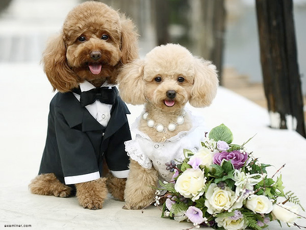 Dog Sitter for Wedding