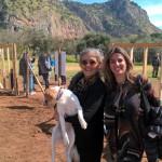Volontari puliscono l'area verde della Favorita destinata ai cani