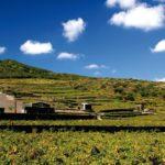 La viticoltura eroica rende il vino unico: I paesaggi terrazzati di Pantelleria