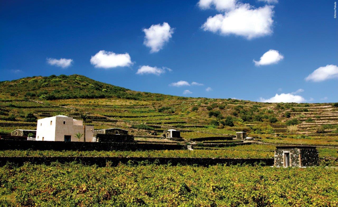 Cantina Donnafugata Pantelleria_ph AnnaPakula